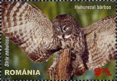 [Birds of Prey - Owls, type JQP]