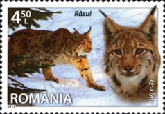 [Fauna - Species of Romania, type JRV]