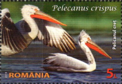[Protected Wildlife in Romanian Reserves - Pelicans, type JZB]