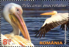 [Protected Wildlife in Romanian Reserves - Pelicans, type JZC]