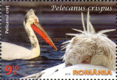 [Protected Wildlife in Romanian Reserves - Pelicans, type JZD]