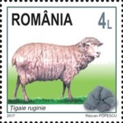 [Breeds of Sheep from Romania, type KLZ]