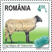 [Breeds of Sheep from Romania, type KMA]