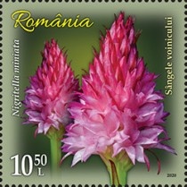 [Flowers - Orchids, Typ LDF]