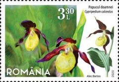 [Flora - Protected Flowers of Romania, Typ LDL]