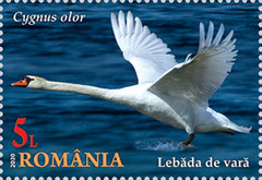 [The Danube Delta - Swans, type LDR]