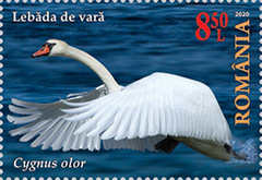 [The Danube Delta - Swans, type LDS]