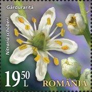 [Flora from National Reserves, type LGZ]
