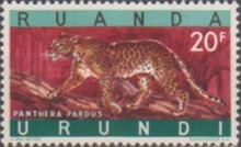 [Endangered Animals - Big Cats, type CM]