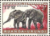 [Endangered Animals - Elephants, type CO]