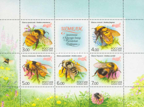 [Insects. Bumblebees, Typ ]