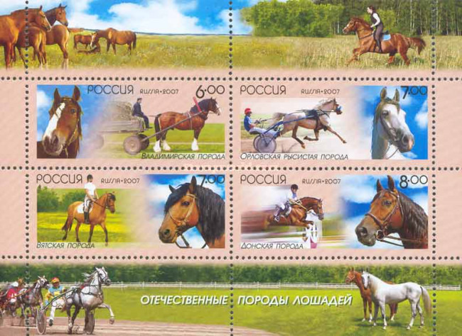 [Domestic Sorts of the Horses, Typ ]