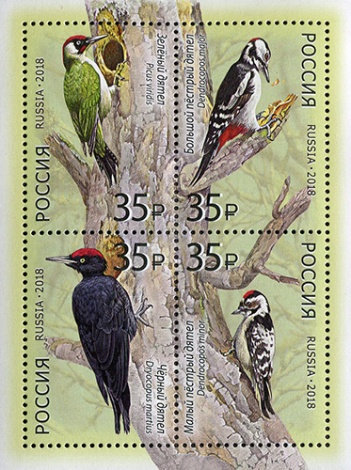[Birds - Woodpeckers of Russia, Typ ]