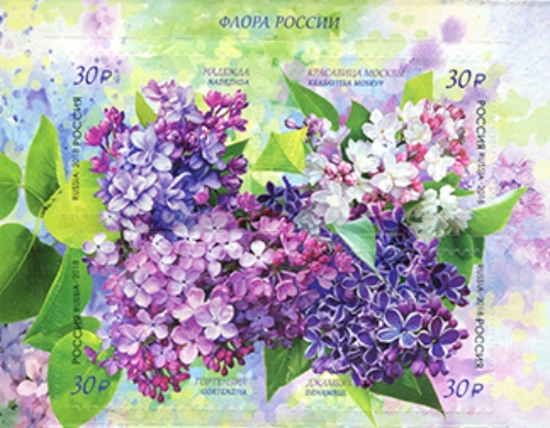 [Flora of Russia - Lilac, Typ ]