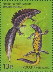 [Fauna - Newts - Joint Issue with Belarus, Typ BML]