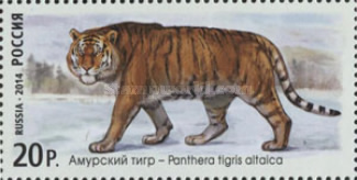 [Fauna of Russia - Wild Cats, Typ BXP]