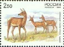 [Deers.Russia-China Joint Issue, Typ VK]