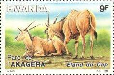 [Akagera National Park, Typ ASQ]