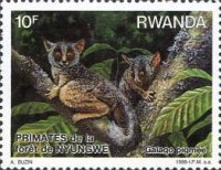 [Primates of Nyungwe Forest, Typ AUH]