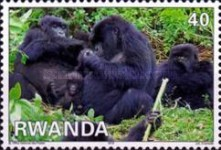 [Fauna - Mountain Gorillas, Typ AXV]