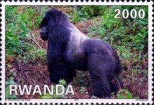 [Fauna - Mountain Gorillas, Typ AXW]