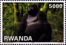 [Fauna - Mountain Gorillas, Typ AXX]