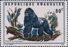 [Local Fauna - Mountain Gorilla, Typ IV]