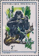 [Local Fauna - Mountain Gorilla, Typ IY]