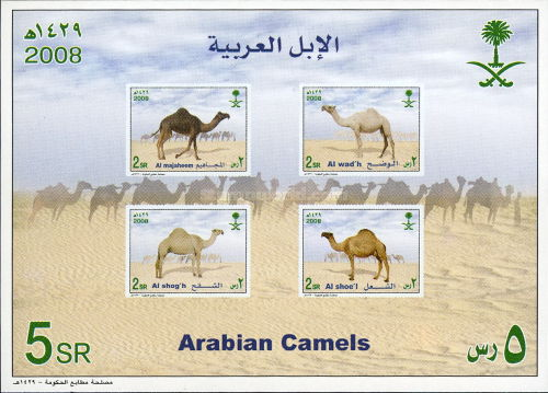 [Arab Camels, type BGS]