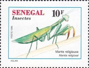 [Insects, Typ AVF]