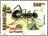 [Fauna - Insects, type BUH]