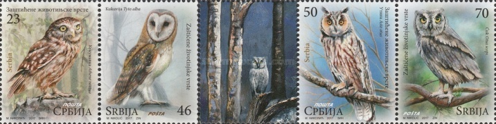 [Protected Animals - Owls, type ]