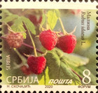 [Definitives - Fruits, type AEP]