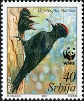 [World Wildlife Fund - Black Woodpecker, type BL]
