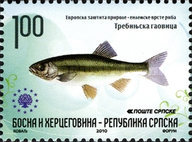 [European Nature Protection - Endemic Fish, type RR]