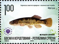 [European Nature Protection - Endemic Fish, type RS]