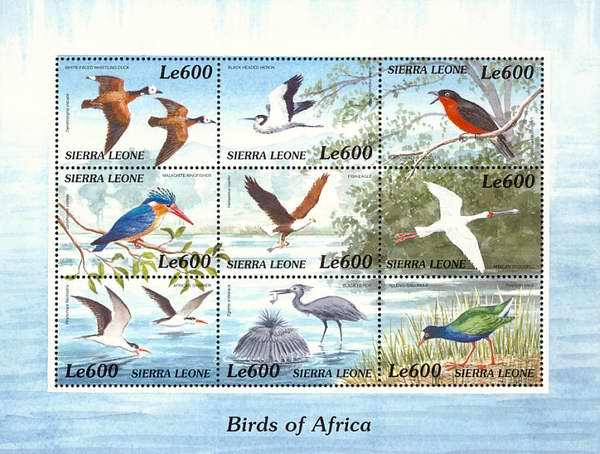 [Birds of Africa, type ]