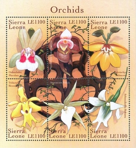 [Orchids of the World, Typ ]