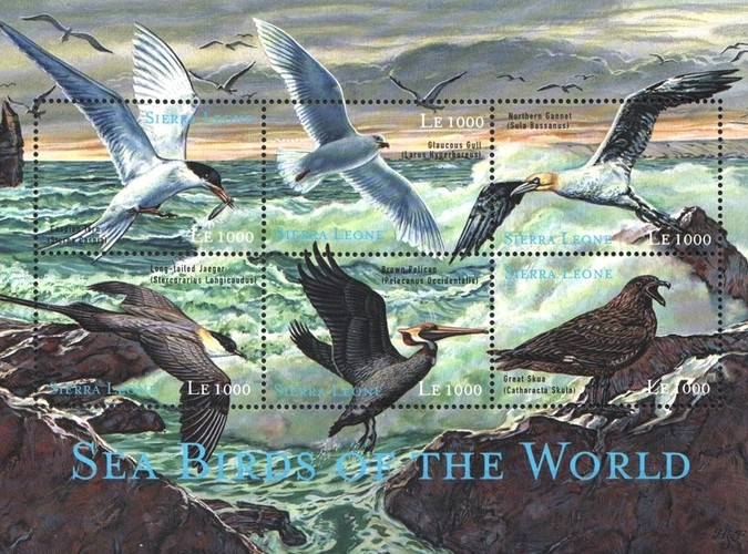 [Seabirds of the World, Typ ]