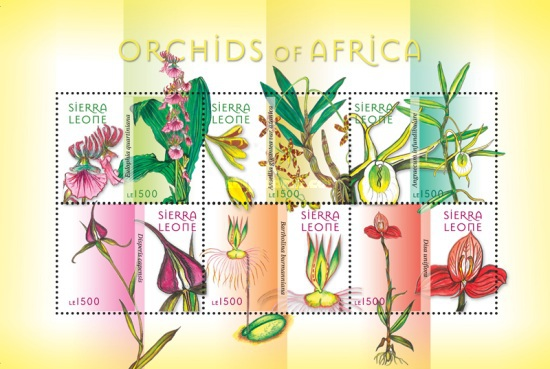 [Flowers - African Orchids, Typ ]