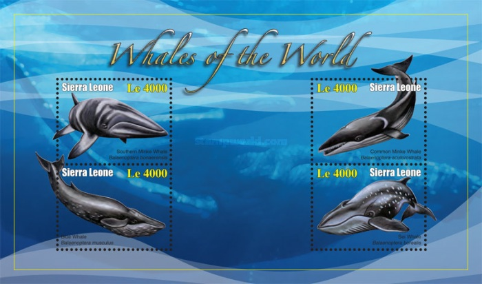 [Marine Life - Whales of the World, Typ ]