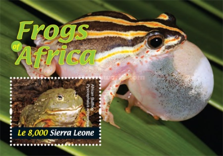 [Fauna - Frogs of Africa, Typ ]