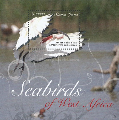 [Seabirds of West Africa, Typ ]