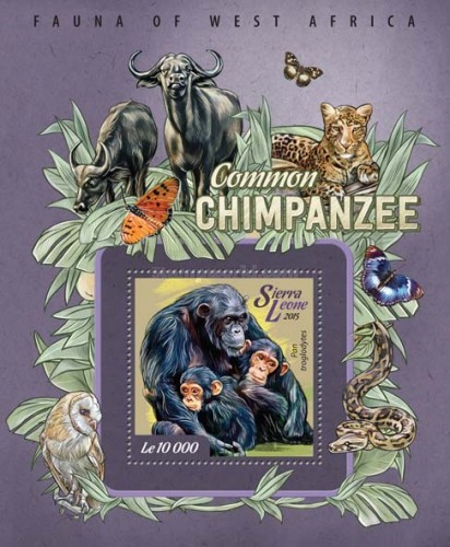 [Fauna of West Africa - Common Chimpanzee, Typ ]