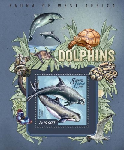[Fauna of West Africa - Dolphins, Typ ]