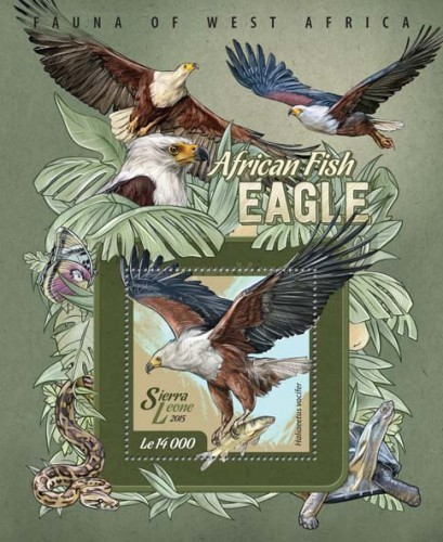 [Fauna of West Africa - Fish Eagle, Typ ]