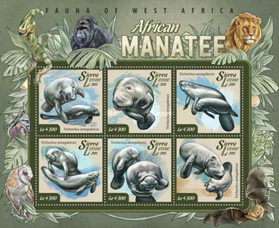 [Fauna of West Africa - African Manatee, Typ ]