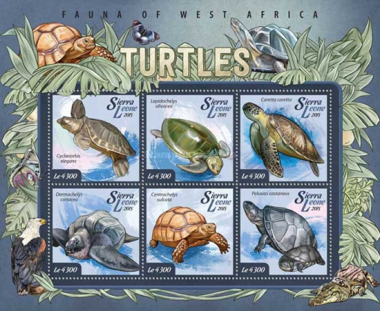 [Fauna of West Africa - Turtles, Typ ]