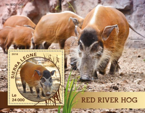 [Fauna - Red River Hog, Typ ]