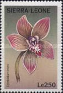 [Orchids of the World, Typ CMV]